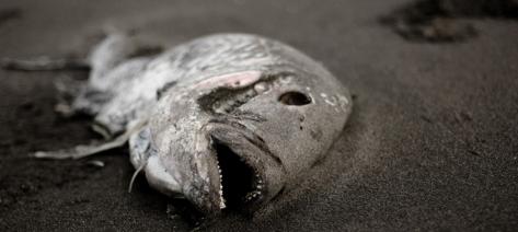 DOJ Fish