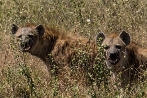 Africa Day 23 - Leaving Serengeti
